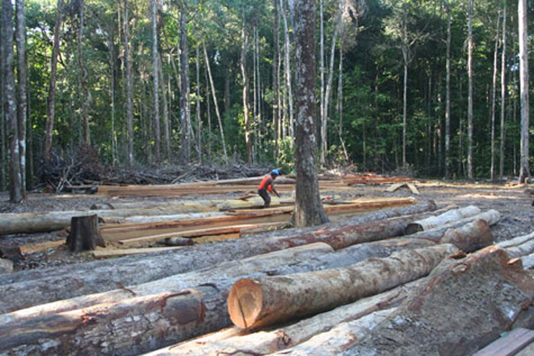 Chinese Indian Logging Companies Dispute Media Reports