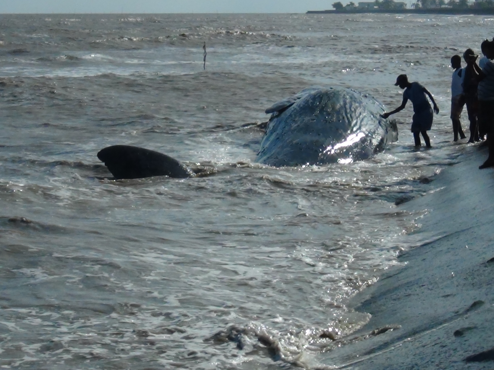 arch russian whale - photo #20
