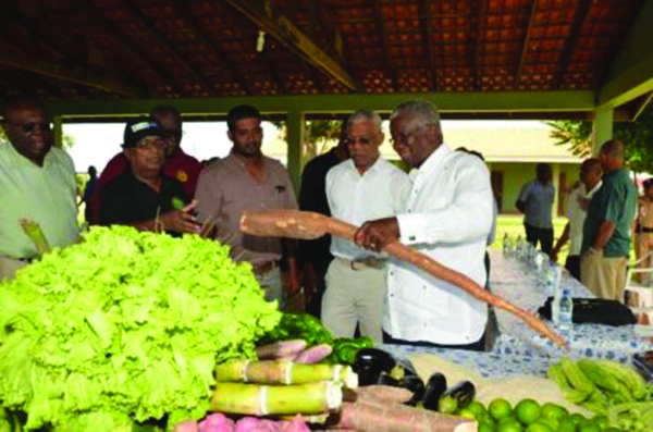 President David Granger and Barbados Prime Minister Freundel Stuart admiring this organically grown bitter cassava as Farm Manager Persaram Ramdat looks on during a visit back in July